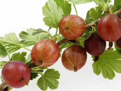 recipes gooseberry
