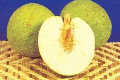 Breadfruit oil down, Recipe Petitchef